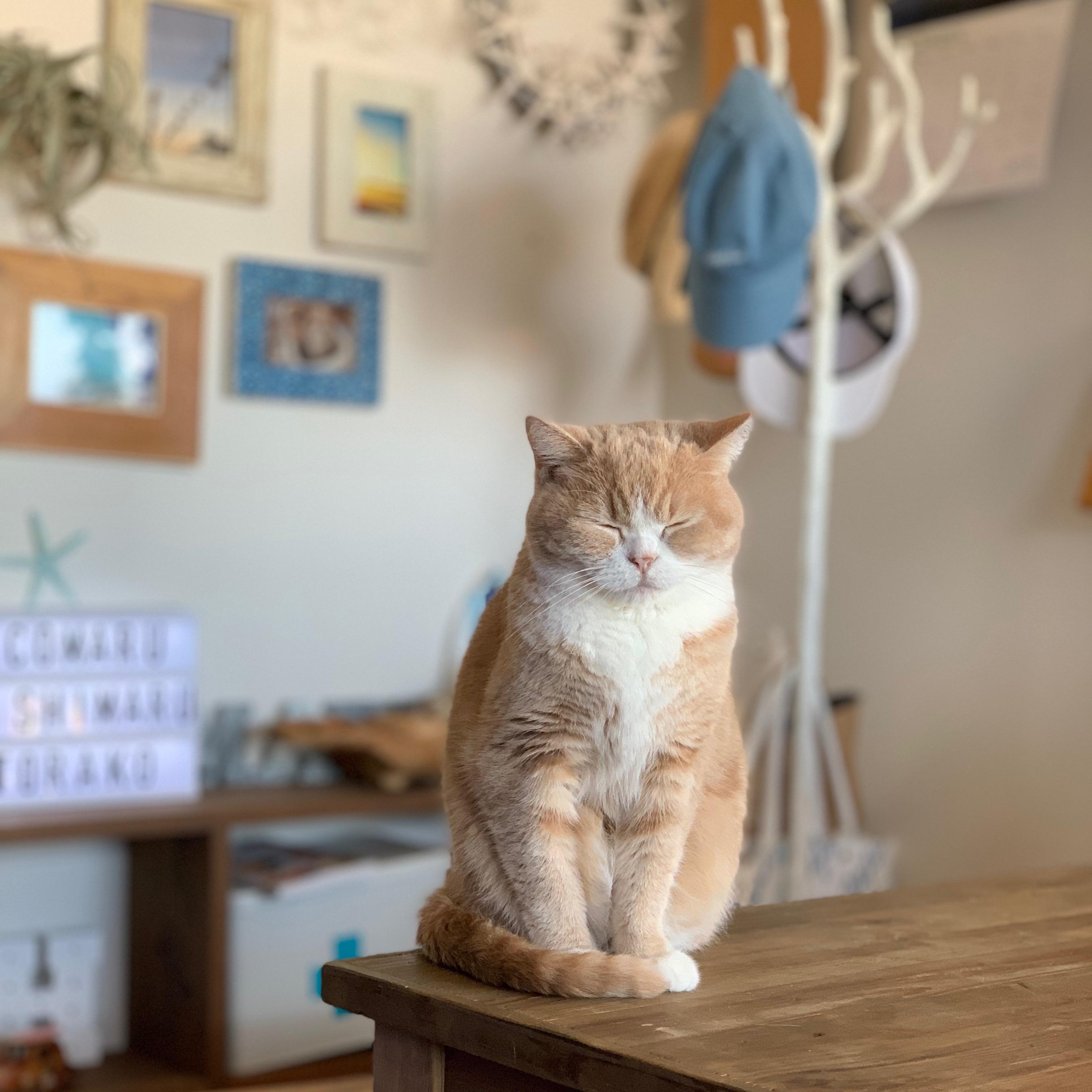 猫と暮らす【福山市の注文住宅なごみの工房】